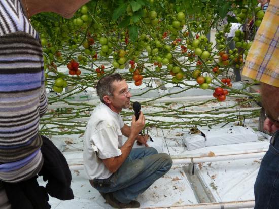 Les tomates d'Alain